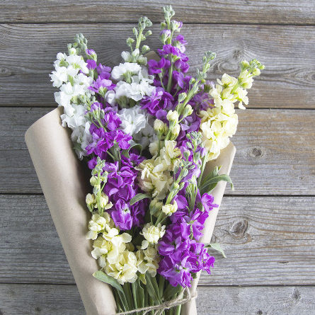 Metiola Lila Provence Bouquet